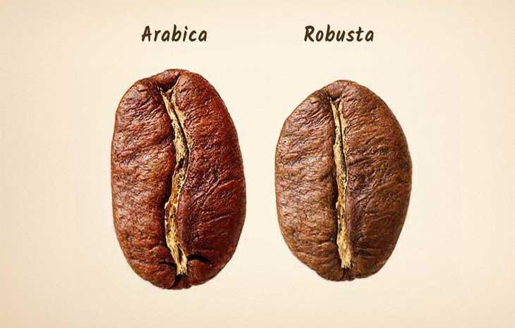 روبستا یا عربیکا؟